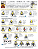 Guide to MN Bumble Bees I (Females)