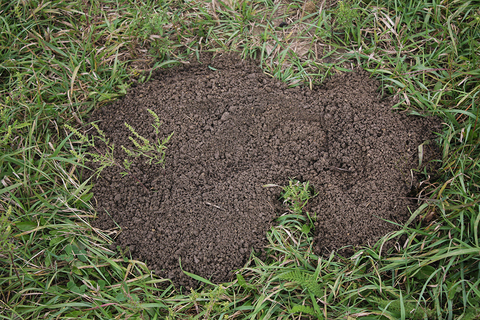 Animals That Cause Mounds in Yards | eHow