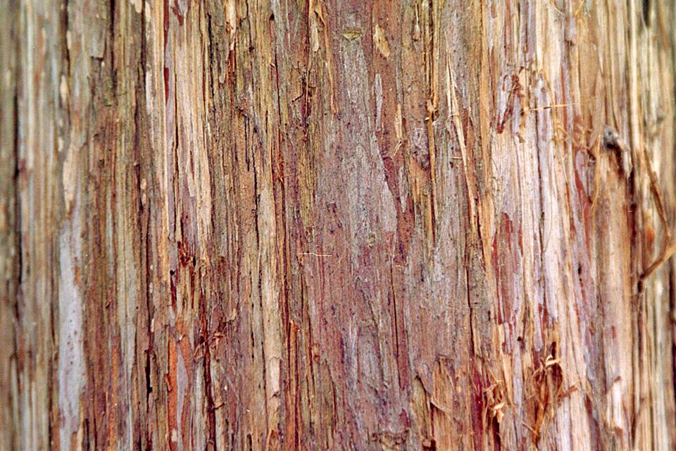 Cedar Wood: Eastern Red Cedar Wood